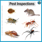 pest inspections for home